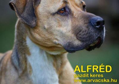 Alfréd