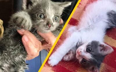 Macskamesék: új kis jövevény érkezett, Mütyür