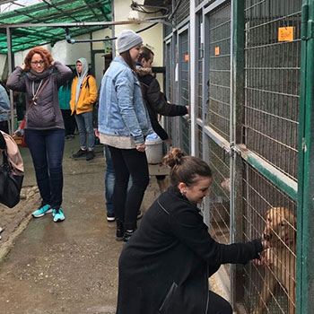Rólunk: állatvédelem, felelős állattartás