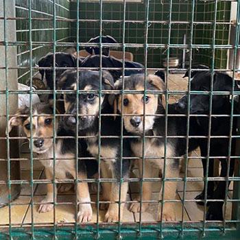 Felelős állattartás: ivartalanítás