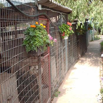Szentendrei Árvácska: kutyamenhely